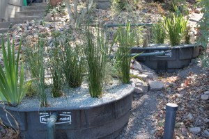 greywater re-use
