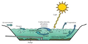 how a lagoon septic system works