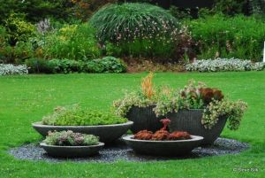 planting on septic field