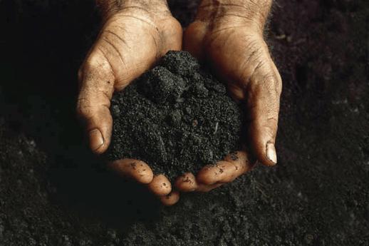 The Quintessential Black Farmer: African American Women Growers Unite