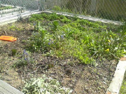 The Quintessential Black Farmer: Preparing the garden