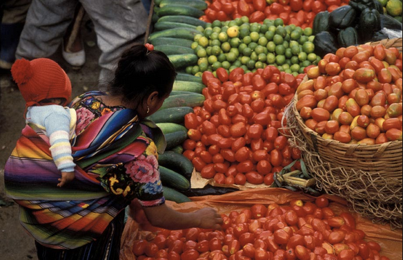 UN: Democracy and diversity can mend broken food systems