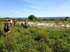 Finger Lakes CRAFT: Inspiring Beginning AND experienced Farmers