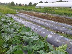 Incubator Farm News: Drop the Plows!