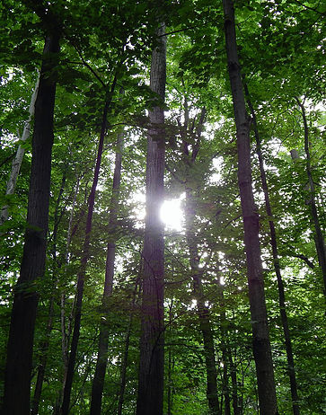 The Forest Talks: A series of guided hikes