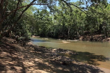 Dry Zone Riverine Forest: This forest type is associated with the rivers and flood plains of the Dry Zone. All dry zone rivers form an important habitat for wild life especially large grazing animals such as elephants, deer and buffalo.