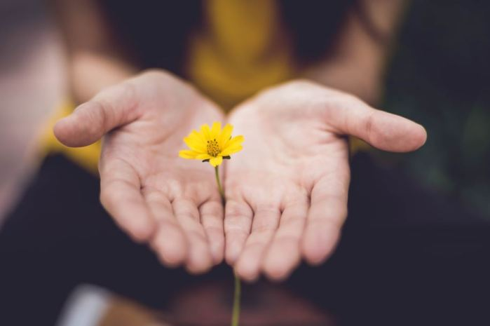 Simple image of two hands cupped around a single upright buttercup flower