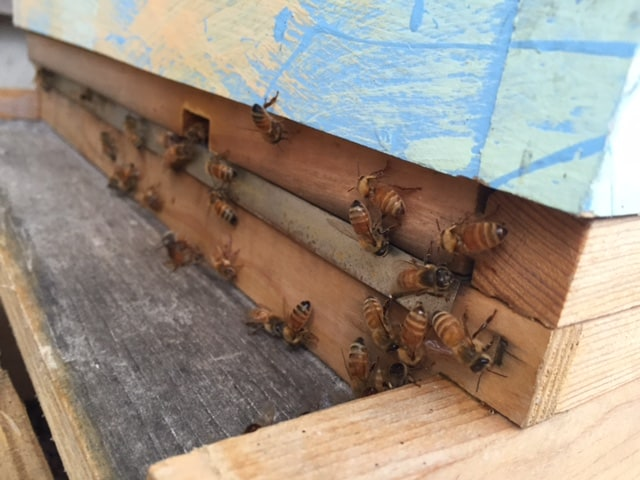 Busy Bees at Grouse