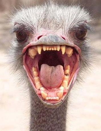 https://i2.wp.com/growabrain.typepad.com/growabrain/images/ostrich_head.jpg