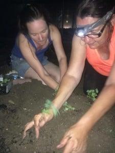 night planting