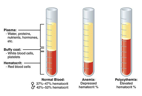 What is HCT? What are the situations in which hematocrit value changes?