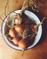 Home Grown Onions