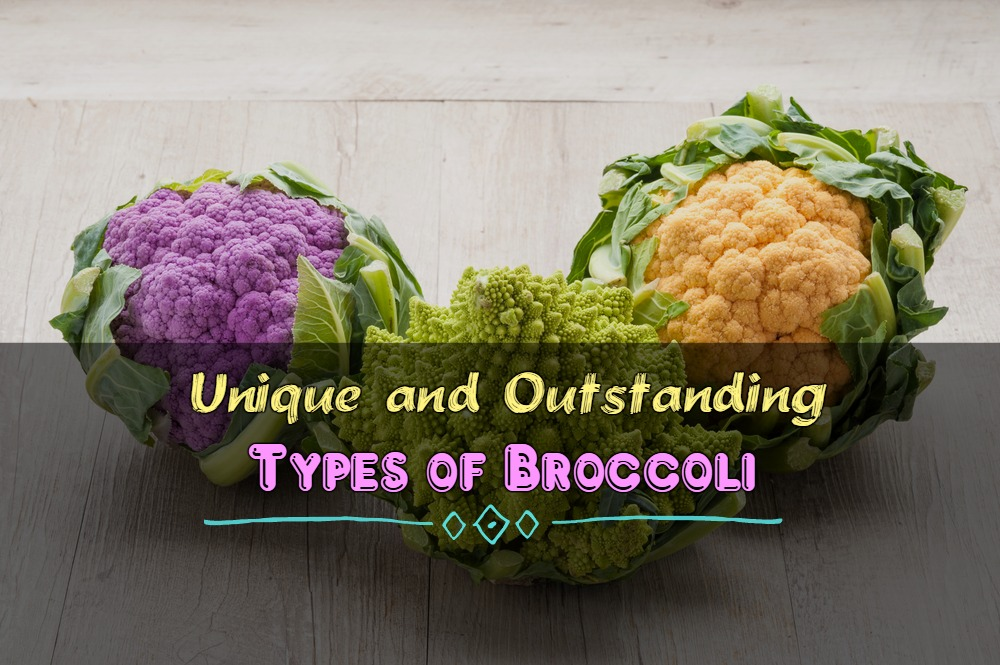 Unique and Outstanding Types of Broccoli