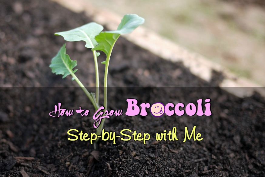 How To Grow Broccoli The Ultimate Guide