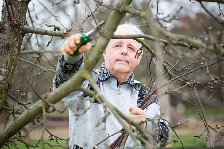The Benefits of Tree Pruning