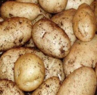 Potato International Kidney 2