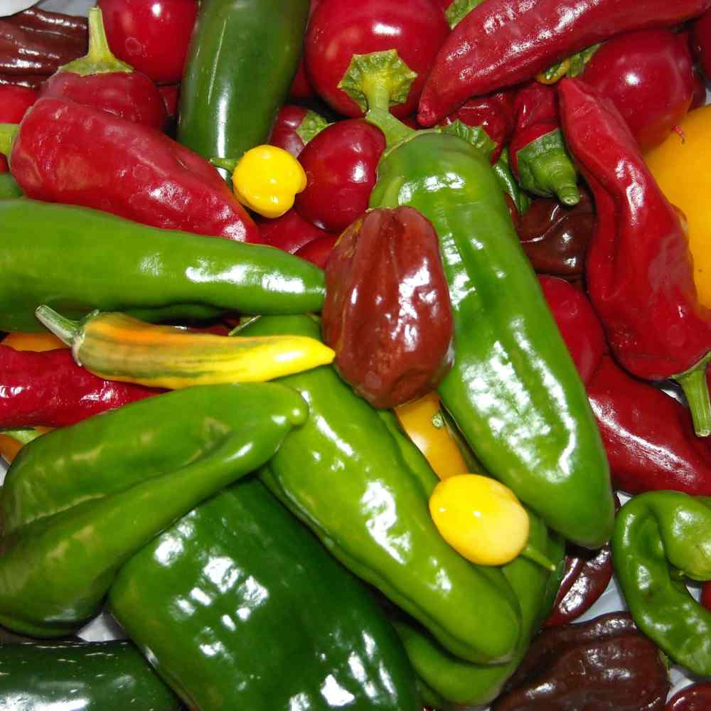What Types Of Peppers Should You Grow? (This Will Help You Decide)