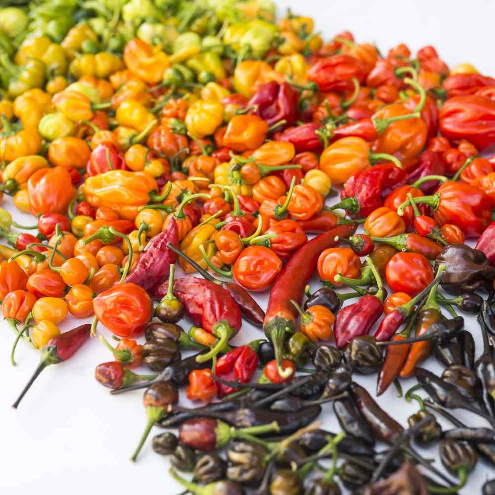 Where Do the Hottest Peppers In the World Come From?