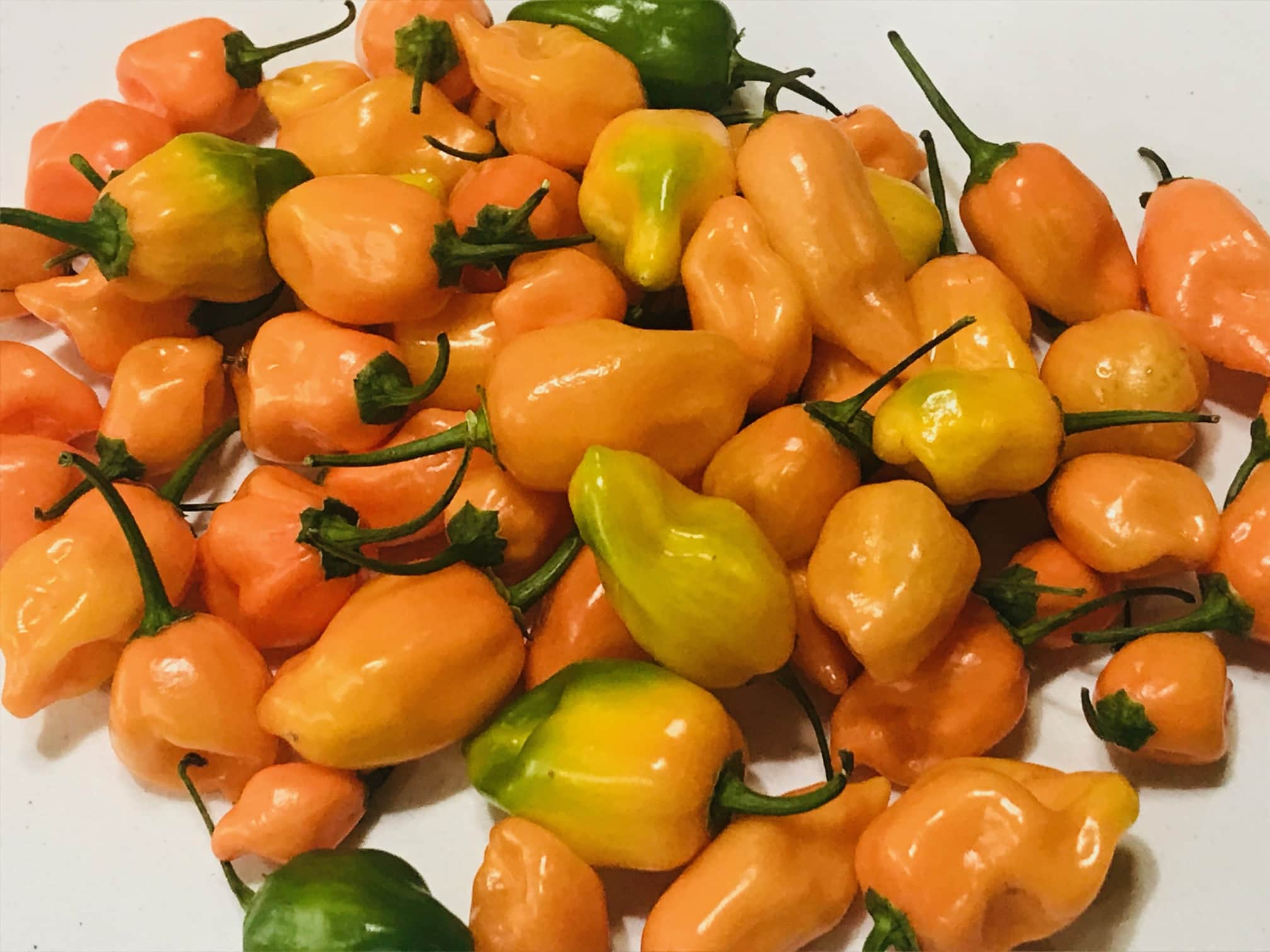 Best Tasting Peppers Habanero Peppers
