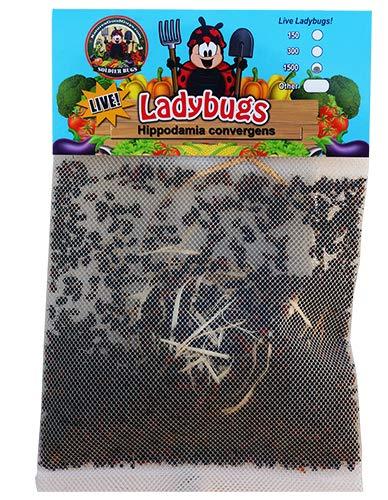 1500 Live Ladybugs - Good Bugs product image on Amazon