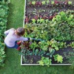 Useful Gardening for Beginners tips