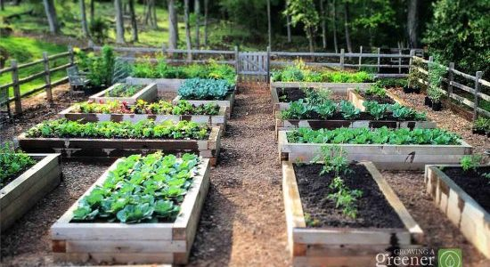 How to Use Raised Garden Beds in Your garden