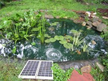perma pond 1