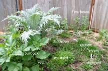 permaculturegardens