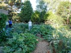 permaculturegardens4