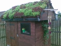 Beatifully kept Shed Green Roof