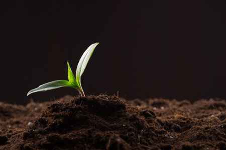 Discipleship Devotional Study Guide - Parables - Matthew 13:3-9 - A Farmer Went Out To Sow His Seed - Growing As Disciples