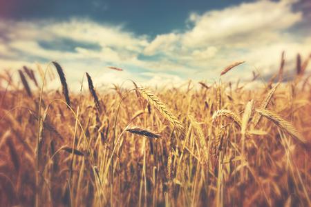 Discipleship Devotional Study Guide - Rhythms - Galatians 6:7-10 - Sow - Reap - Growing As Disciples
