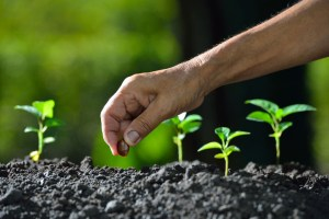 Discipleship Devotional Study Guide - Life - Galatians 6:8 - Sows To Please The Spirit - Growing As Disciples