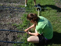 Setting up the drip irrigation system!