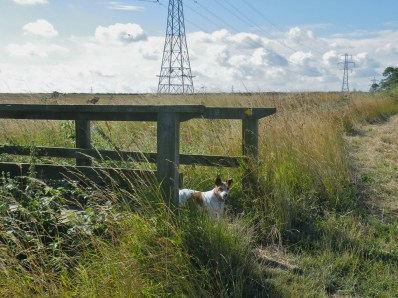 Mouse on footbridge