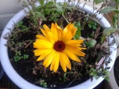 Still a few flowers in the garden