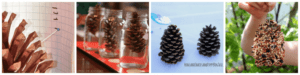 Pine Cone science experiments for preschoolers.