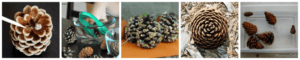 Pine cone science activities for preschoolers.