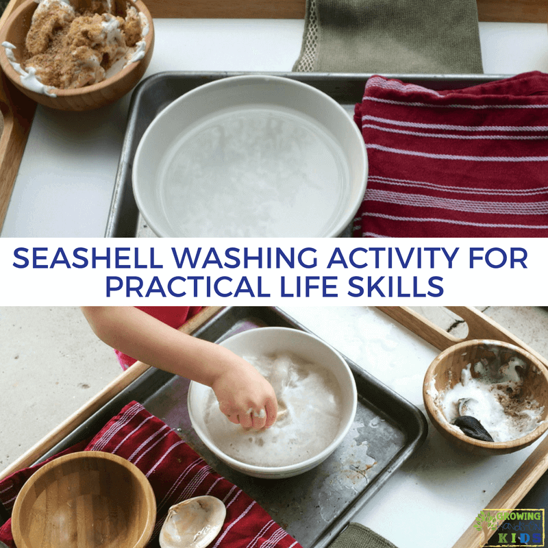 Seashell Washing Activity for Practical Life Skills. Montessori inspired activities at home.