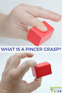 What is a pincer grasp?