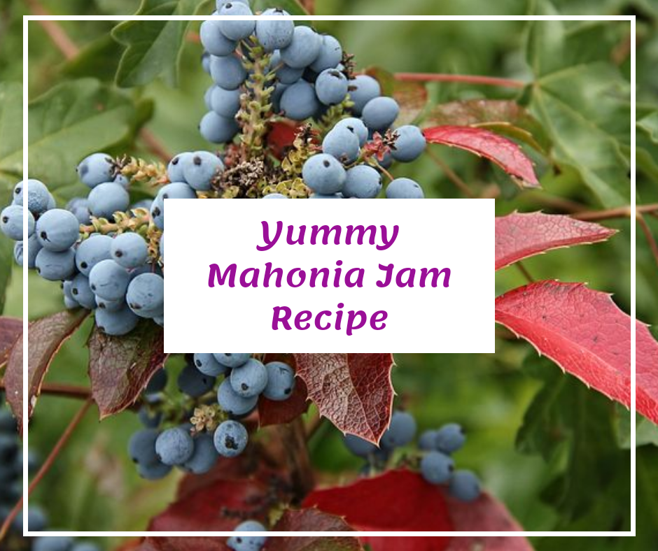 Recipe for mahonia jelly