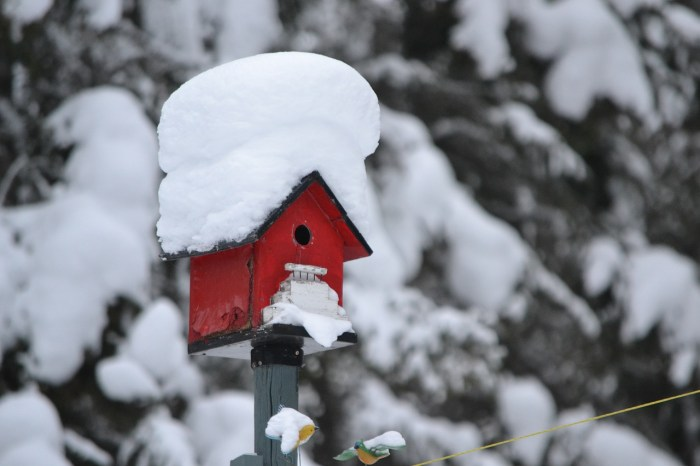 Provide garden wildlife with hird food and bird houses to help them survive the winter