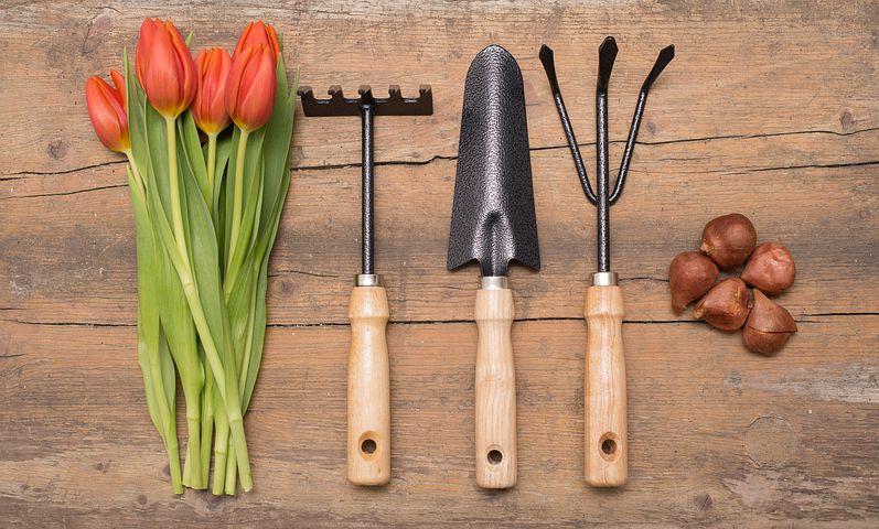 growing vegetables needs tools