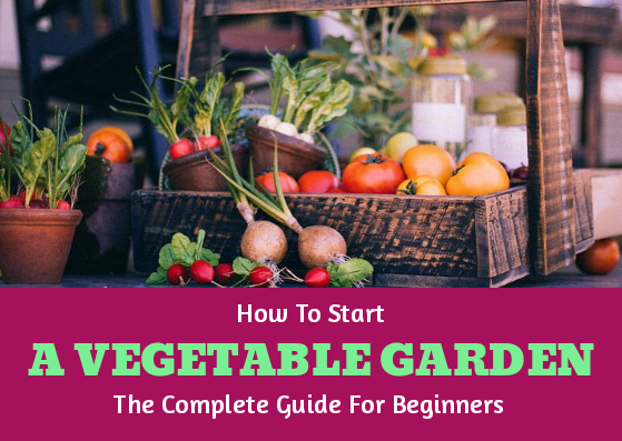 start a vegetable garden course allotment guide