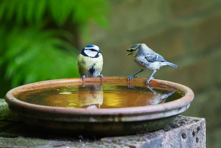 Help your birds and bees,  Wildlife garden ideas and tips to try with kids.  Learn how to make a wildlife garden pond, a habitat for bees, lady bugs, backyard birds and wildlife. Simple ideas for providing habitats, food, shelter and protection like putting up nesting boxes or adding an insect hotel. There's something to do whether its spring summer or Autumn
