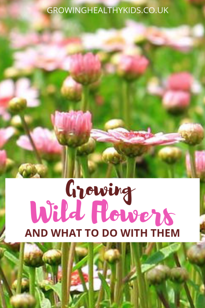 Wildflower growing and activities to do with them