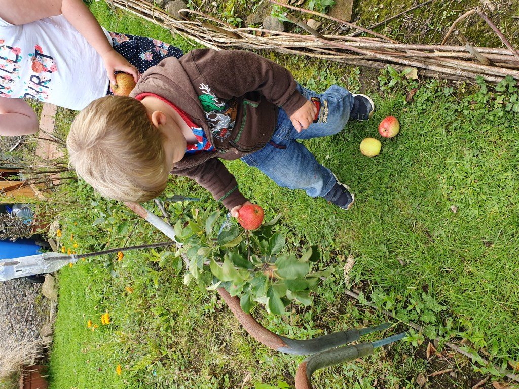 Kids watering and picking apples as their gardening chore.