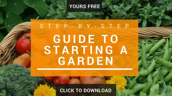 Step-by-Step Guide to Growing in the Garden