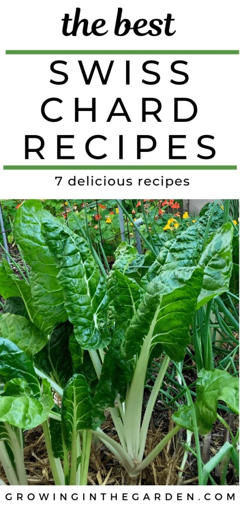 The best recipes for Swiss Chard