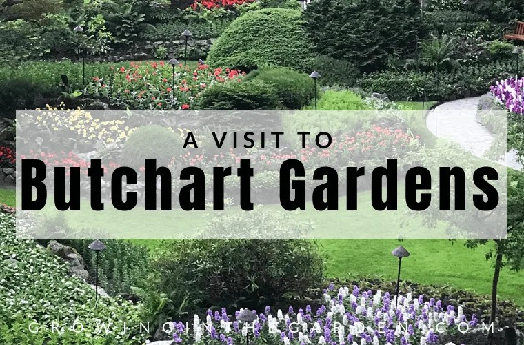What's Growing in the Butchart Gardens #butchartgarden #garden #gardentour #flowergarden